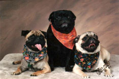 Rudy, Pugsley and Odie